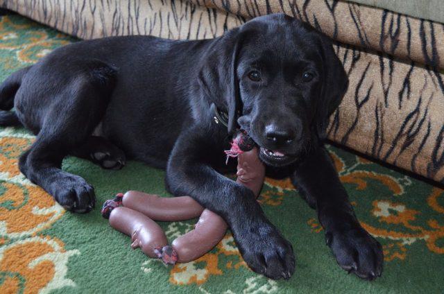 Для собаки грызть – процесс естественный