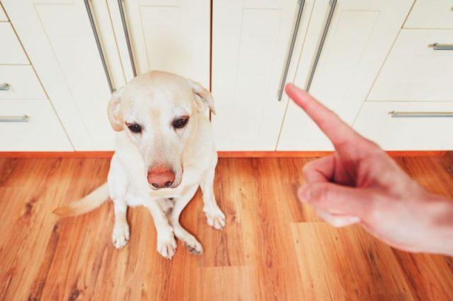 Наказывать собаку нужно только в момент совершения поступка