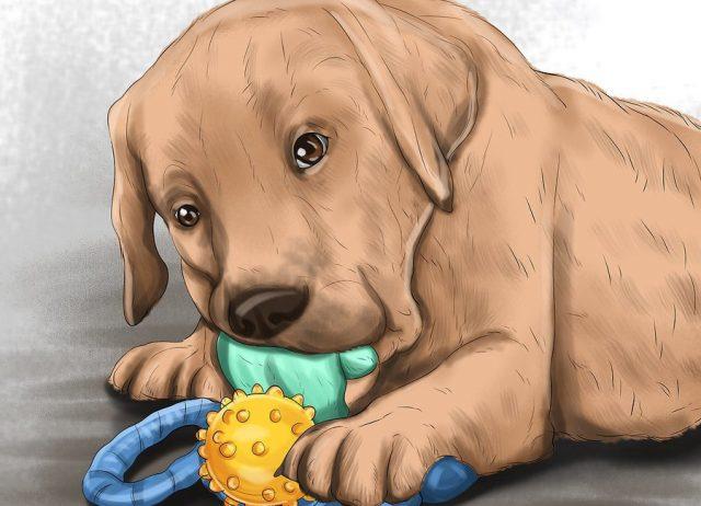 Обзаведитесь игрушками для щенков