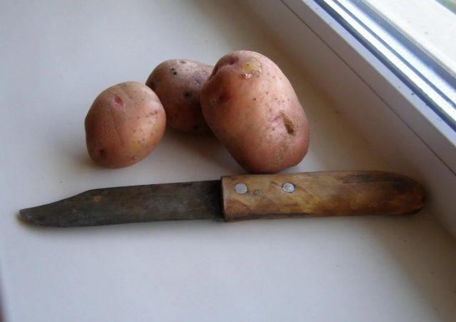 Потребуется нам несколько крупных, примерно одинакового размера, сырых картофелин