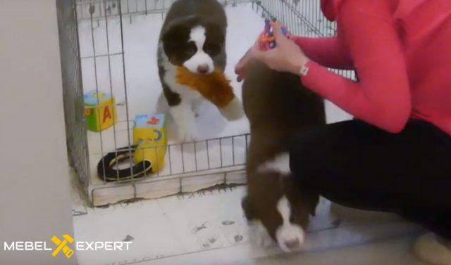 Приучать щенка к клетке нужно постепенно