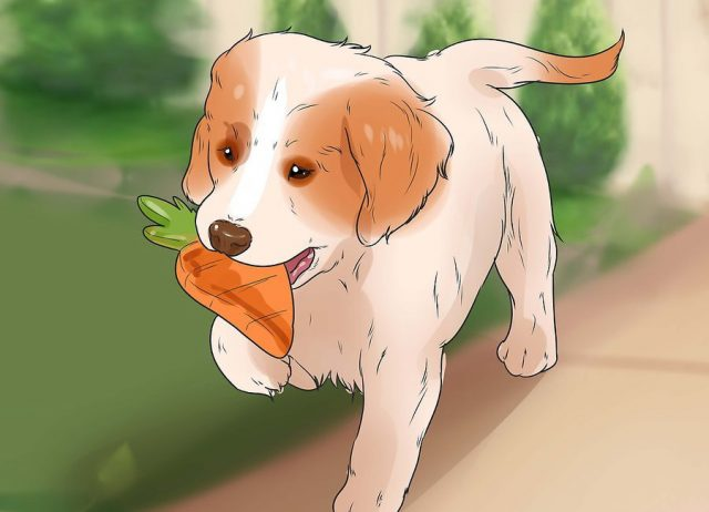 Пусть собака играет с интересными для нее игрушками