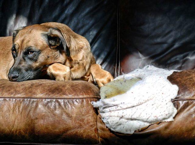 Скука - еще одна причина того, что собака грызет мебель
