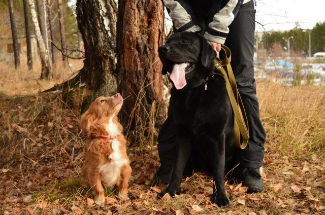 Собак нужно приучать к прогулкам или играм в определенное время суток
