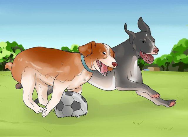 Взрослый пес должен играть с другими собаками