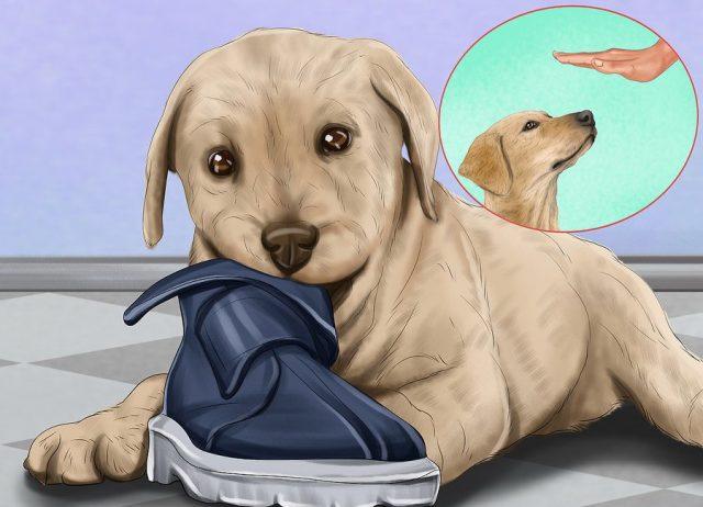 Запретите щенку играть со всеми предметами, с которыми играть нельзя