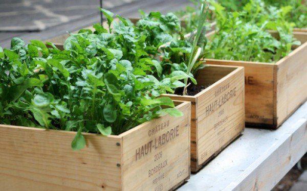 На собственном балконе можно выращивать зелень к столу