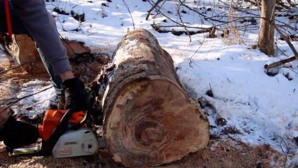 Подготовка спила дерева