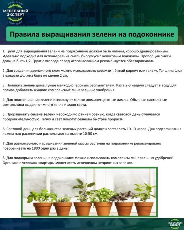 Правила выращивания зелени на подоконнике