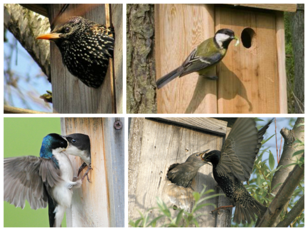Родители вместе с детьми могут за несколько часов соорудить домик для птиц, если возьмут на заметку рекомендации из данного обзора