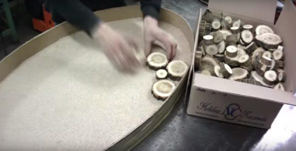 Выкладываются спилы различного диаметра