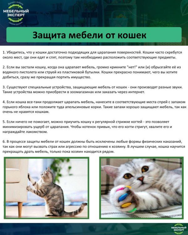 Защита мебели от кошек