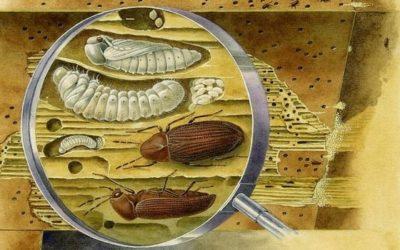 Воздействие насекомых