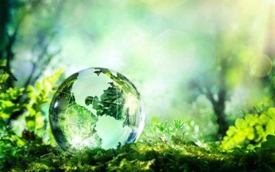Экологическая чистота сосны