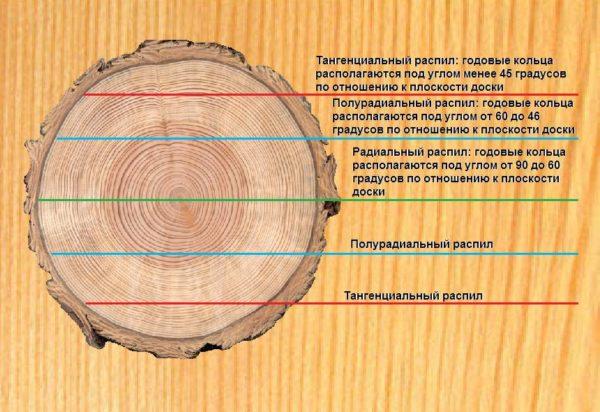 Тангенциальный и радиальный разрезы
