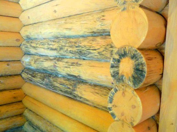 При плохой обработке материала древесину может поразить грибок