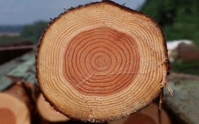 Податливость древесного материала