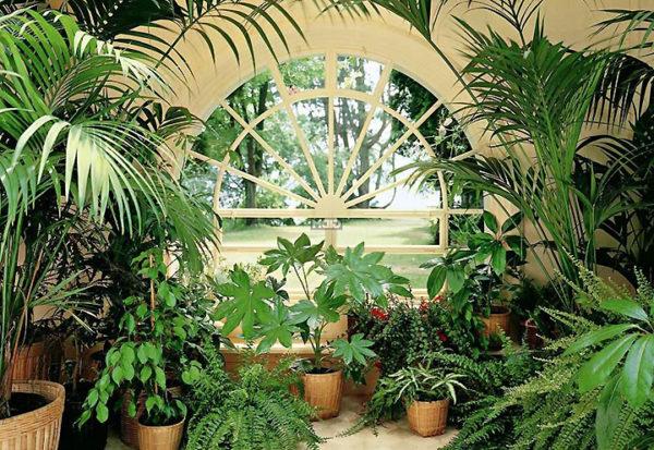 Комнатные растения могут изменять микроклимат в доме
