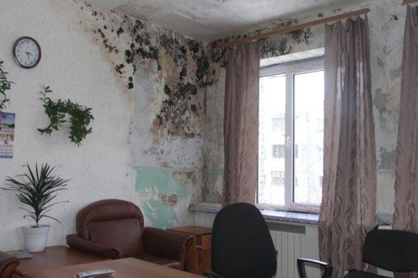 Не стоит ждать, пока плесень и грибок распространятся по всем помещениям, стоит вовремя устранить причину сырости