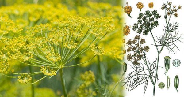 Травы в чехле – приятный аромат и польза для организма